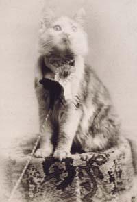 Кошка по кличке Cosey — победительница выставки кошек в Мэдисон-сквер-гарденс в Нью-Йорке в 1895 году
