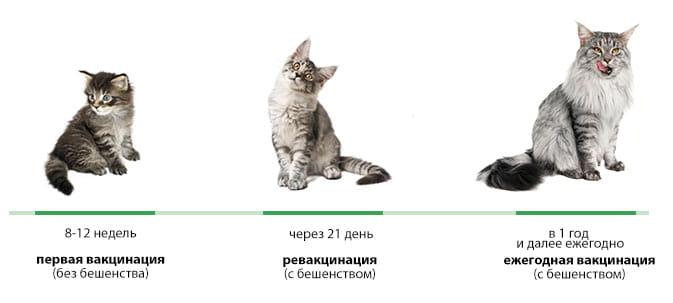 Кормить кошку перед прививкой