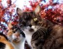 Вредные кошачьи привычки, привитые хозяевами